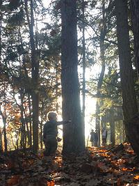 Wandelen in de Oisterwijkse bossen en vennen Boscafé De Rode Lelie